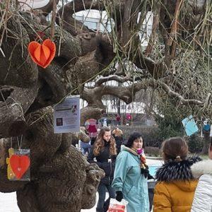 Дървото на влюбените в Русе ще разцъфне и тази година въпреки усложнената обстановка