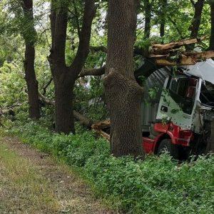 Камион с турска регистрация посече дървета в Русе