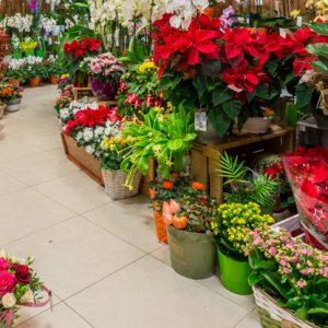 Крадци ограбиха павилион за цветя в центъра на Русе