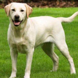 Само 22 русенци са регистрирали кучетата си в общината