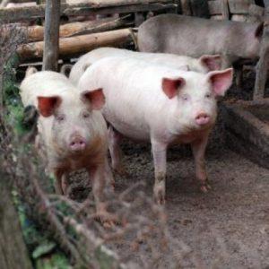 Селата без свинско за Коледа