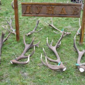 Стотици паднали рога от благороден елен показаха на изложба в ДЛС